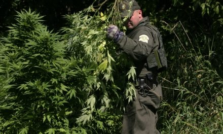 Une plantation de cannabis découverte à la suite d'un incendie à Chertsey