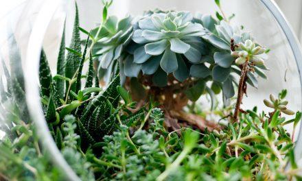Jardiner en hiver au MAJ