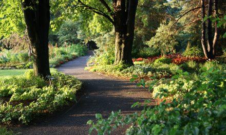 Atelier horticole : couvre-sol végétal, l'autre alternative !