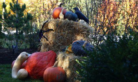 Du plaisir pour toute la famille cet automne à Maison et jardins Antoine-Lacombe!