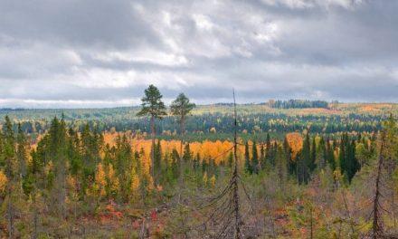 Consultation publique sur le plan d'aménagement forestier intégré tactique