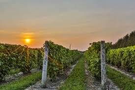 Vignoble Carone annonce la mise en marché de son vin Italus