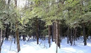 Activités de l'Association forestière de Lanaudière