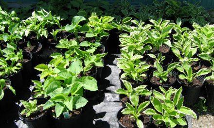 Vente de fin d'année du programme de  Technologie de la production horticole et de l'environnement