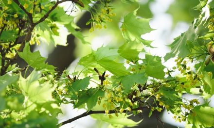 Célébrer le printemps et planter un arbre