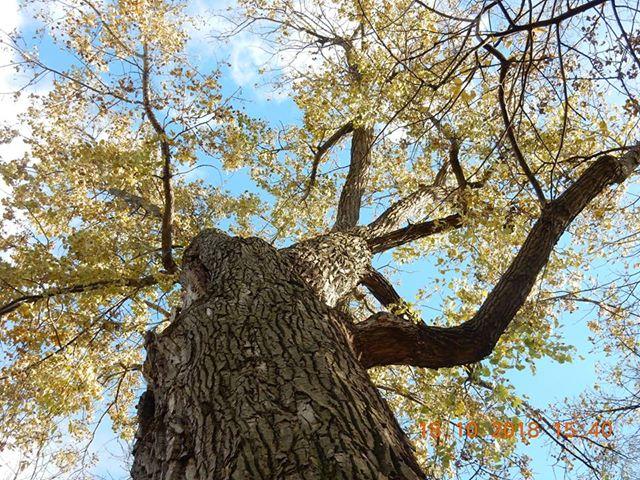 Faire d'un géant un arbre de vie