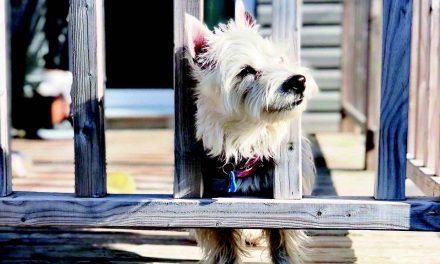 Contrôle animalier à Joliette : mandat au Carrefour Canin de Lanaudière