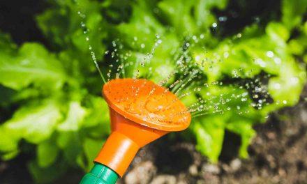Nouvelles conditions d'arrosage et d'utilisation de l'eau potable à Joliette