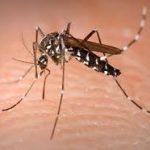 Les Lanaudois invités à se protéger contre les piqûres de moustiques et de tiques
