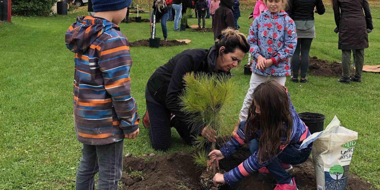 Un projet de 300 arbres complété à Saint-Barthélemy