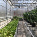 Nouveau programme de Technologie de la production horticole agro environnementale au Cégep à Joliette