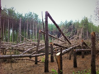 Financement disponible pour l'aménagement durable de nos forêts dans Lanaudière