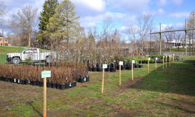 Journée de l'arbre et de l'environnement en « mode virtuel » et distribution de compost en « libre-service »