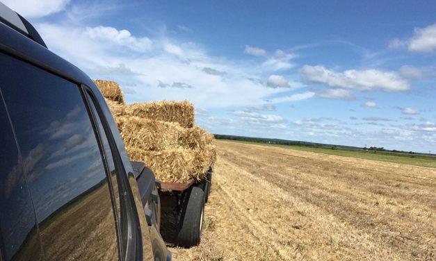 Il en faudra beaucoup plus pour aider le secteur agricole et agroalimentaire