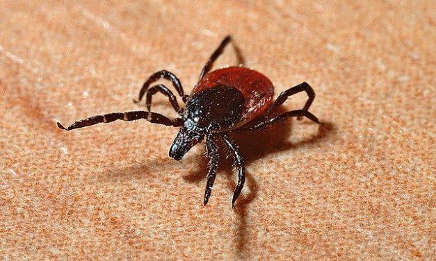 Se protéger des piqûres de tiques et de moustiques afin de se prémunir contre les infections qui peuvent y être associées