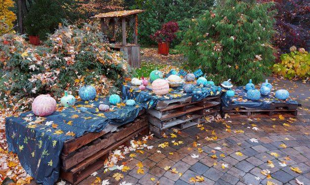 Exposition de citrouilles et décors d'Halloween dans les jardins de la Maison Antoine-Lacombe
