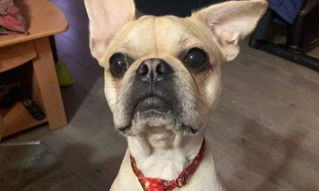 Nouveau contrôleur canin à Saint-Félix-de-Valois – C'est le temps de renouveler votre licence