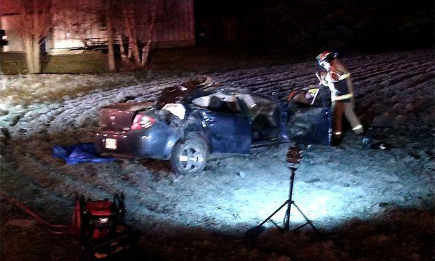 Saint-Cléophas : collision mortelle entre un orignal et un véhicule