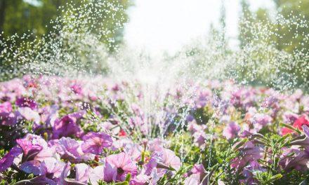 Modification au règlement d'arrosage des fleurs, potagers,  jardinières et plates-bandes