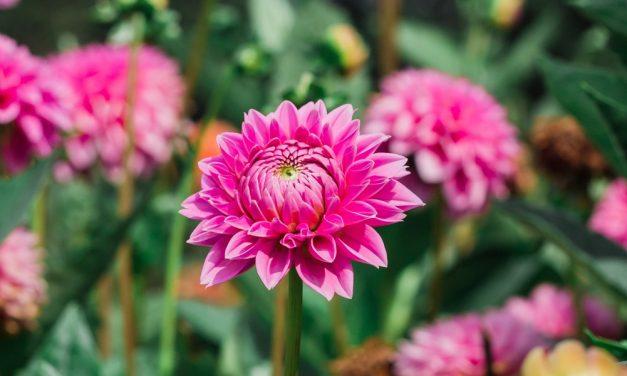 Faites-vous une fleur : de retour dans une formule renouvelée!