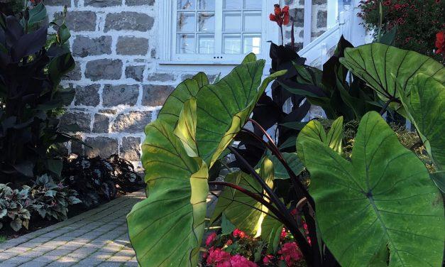 Appel de dossiers pour l'exposition Petits formats à Maison et jardins Antoine-Lacombe