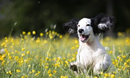 Emplacement du parc canin de Joliette : Joliette annonce le résultat du sondage!